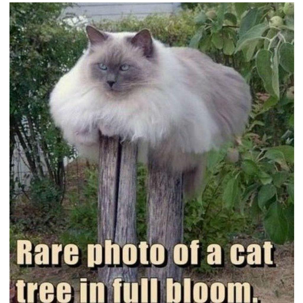 Cat tree cat memes