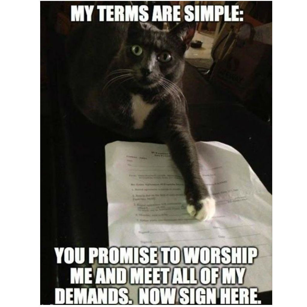 Contract cat memes