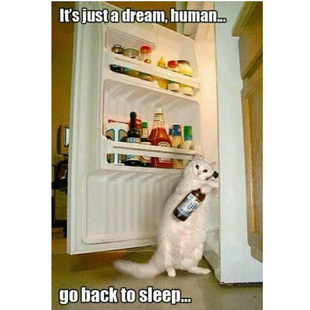 Dream cat memes