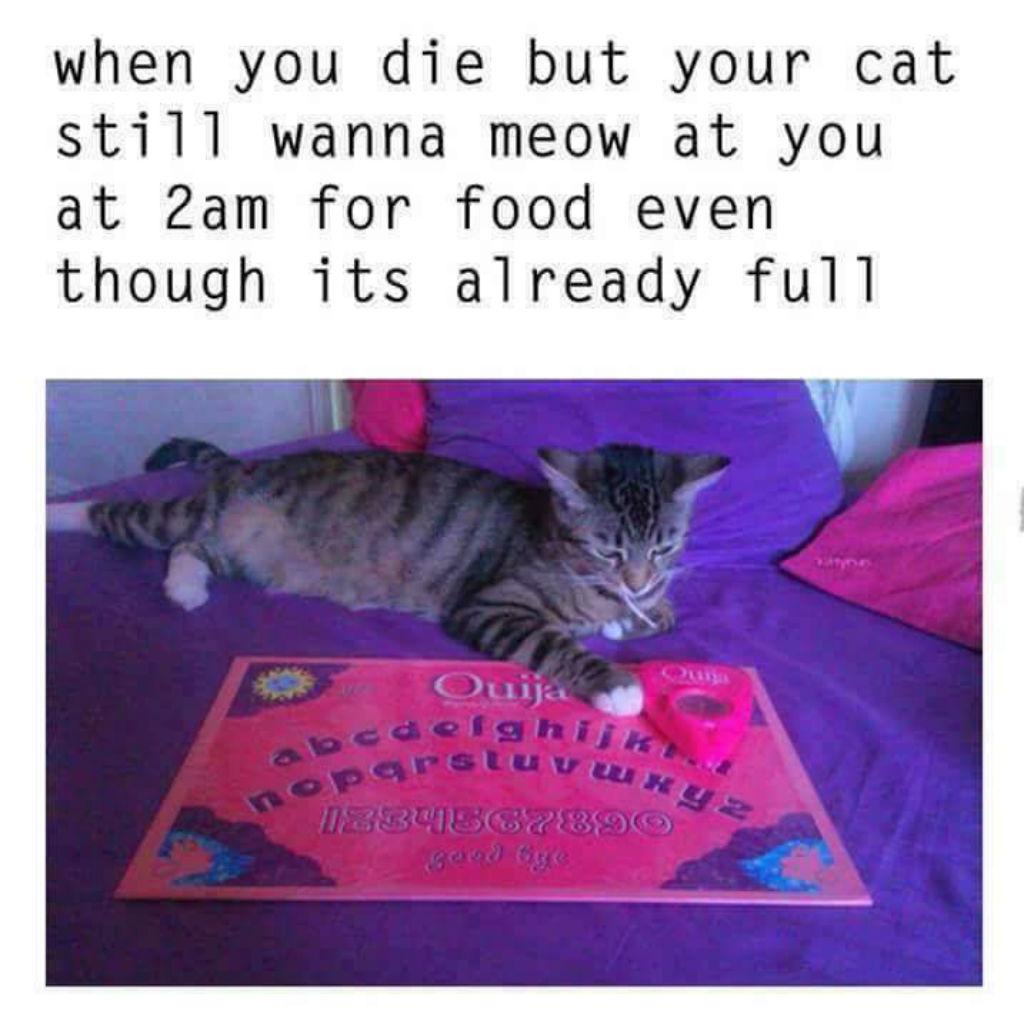 Ouija cat memes