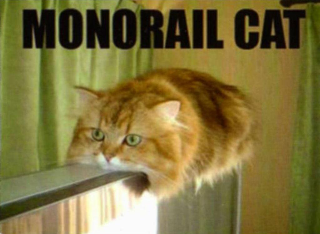 Monorail cat memes