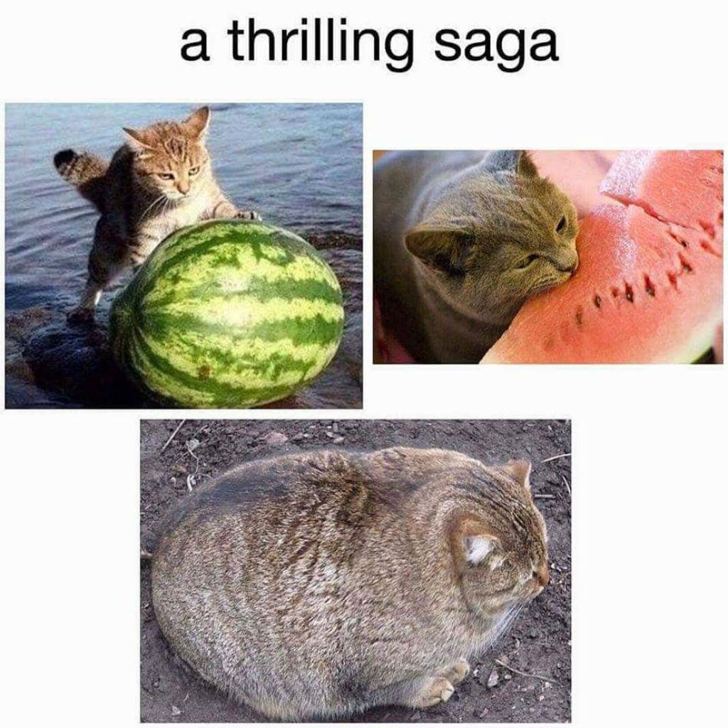 Watermelon cat memes