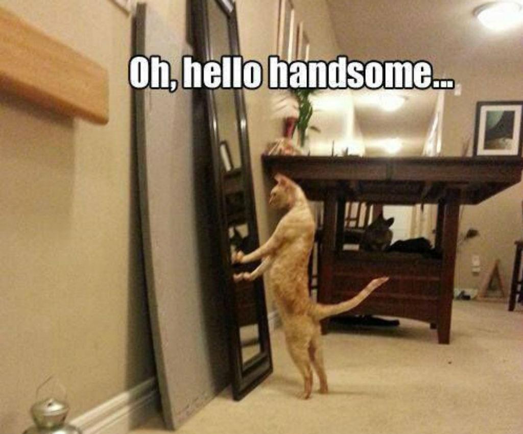 Handsome cat memes