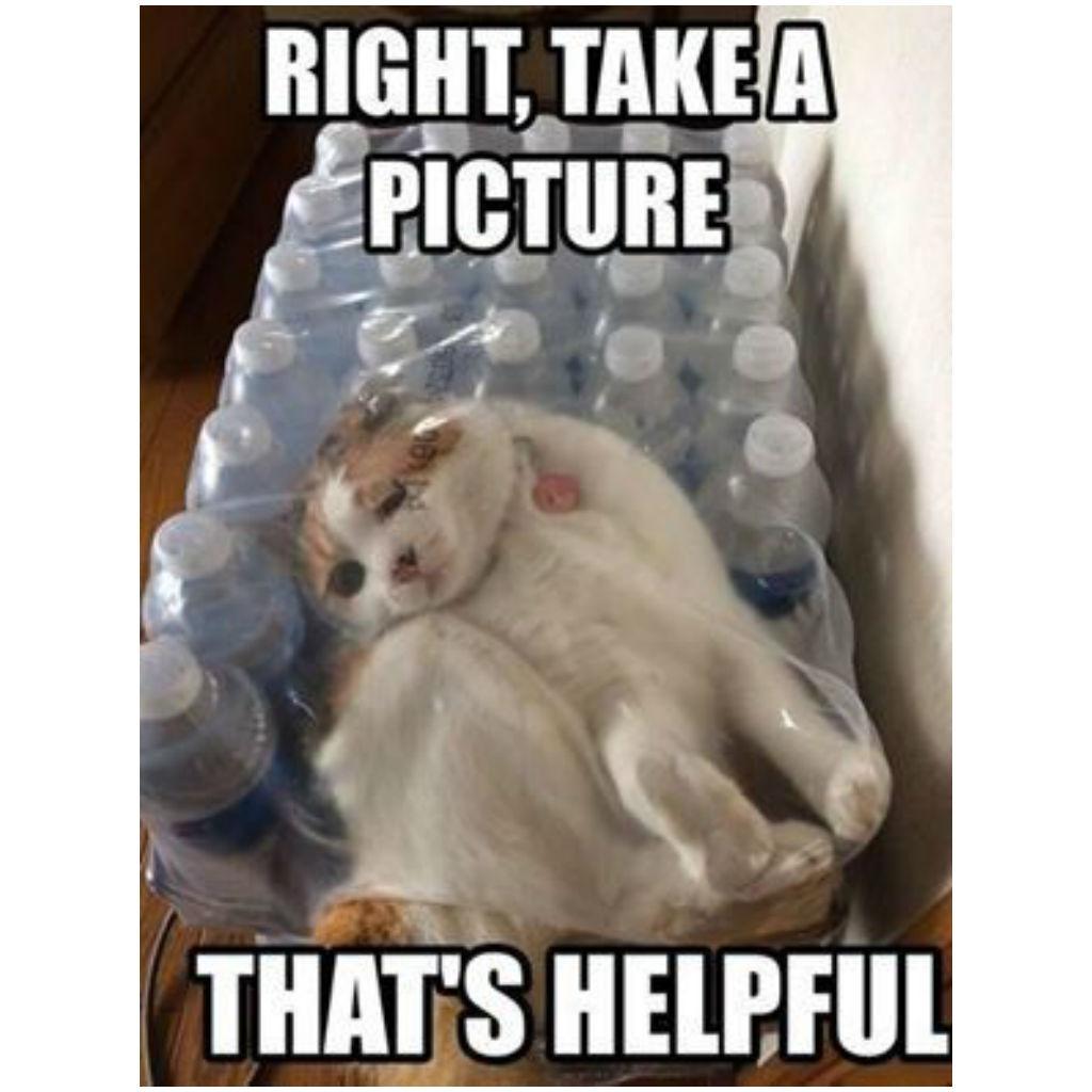 Plastic cat memes