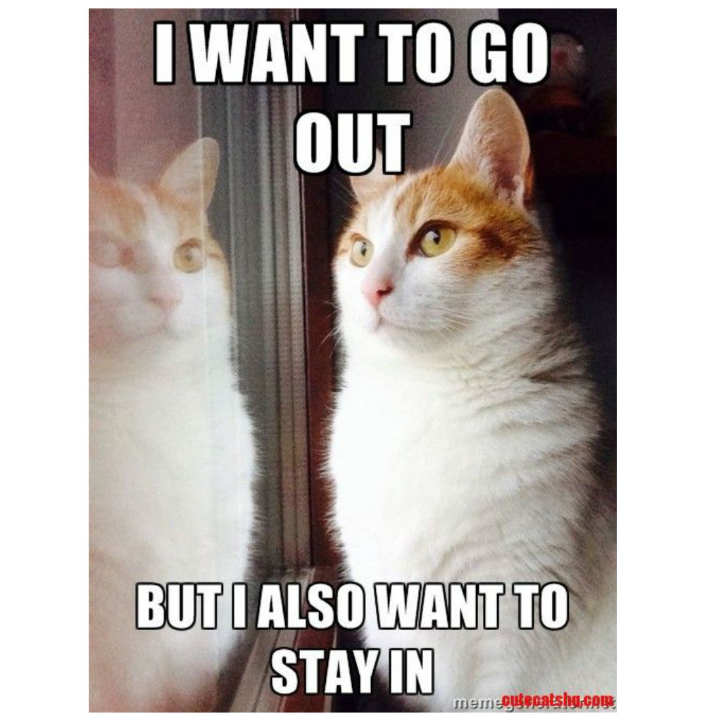 Conflicted cat memes