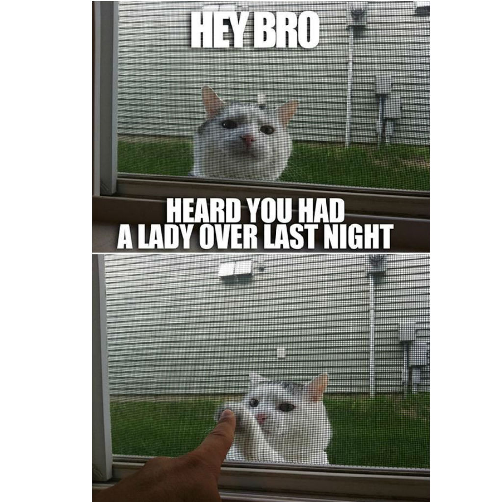 High five cat memes
