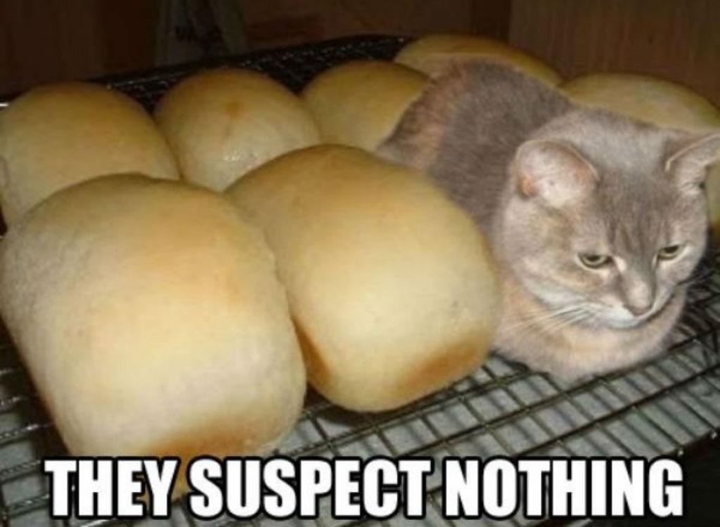 Bread cat memes