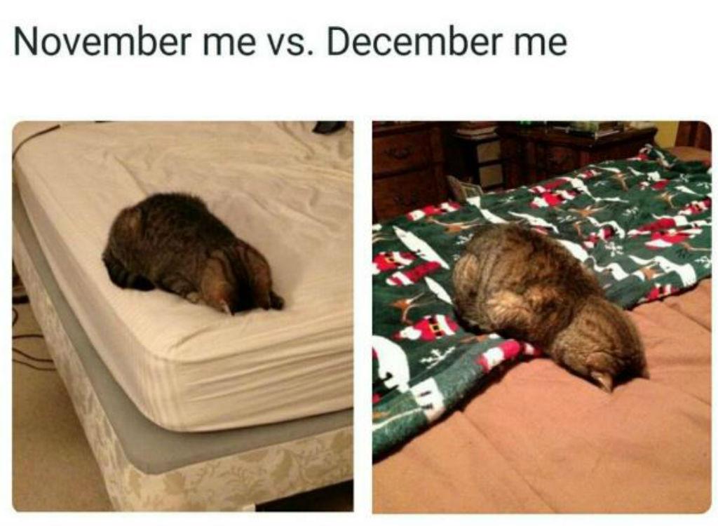 December cat memes