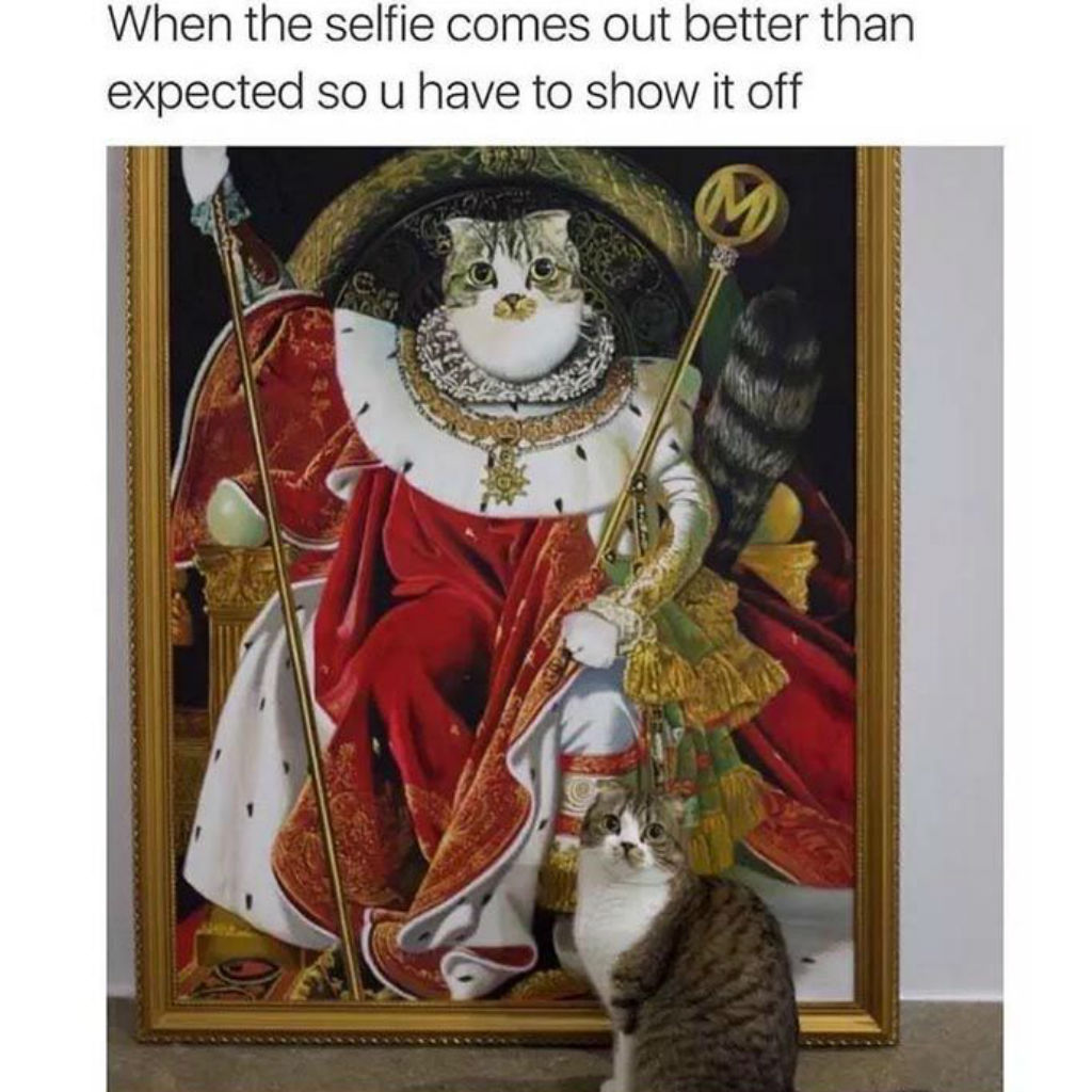 Selfie cat memes