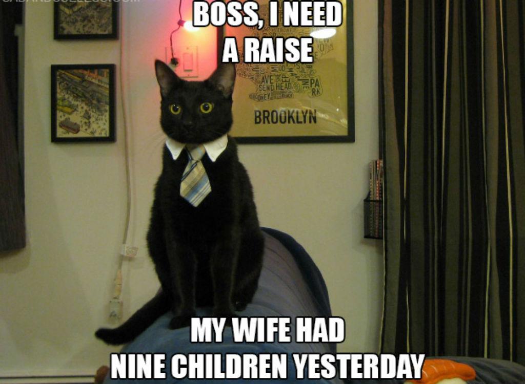 Need a raise cat memes