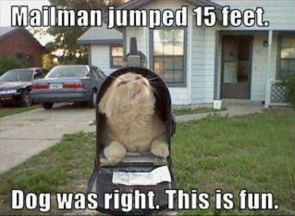 Mailman cat memes