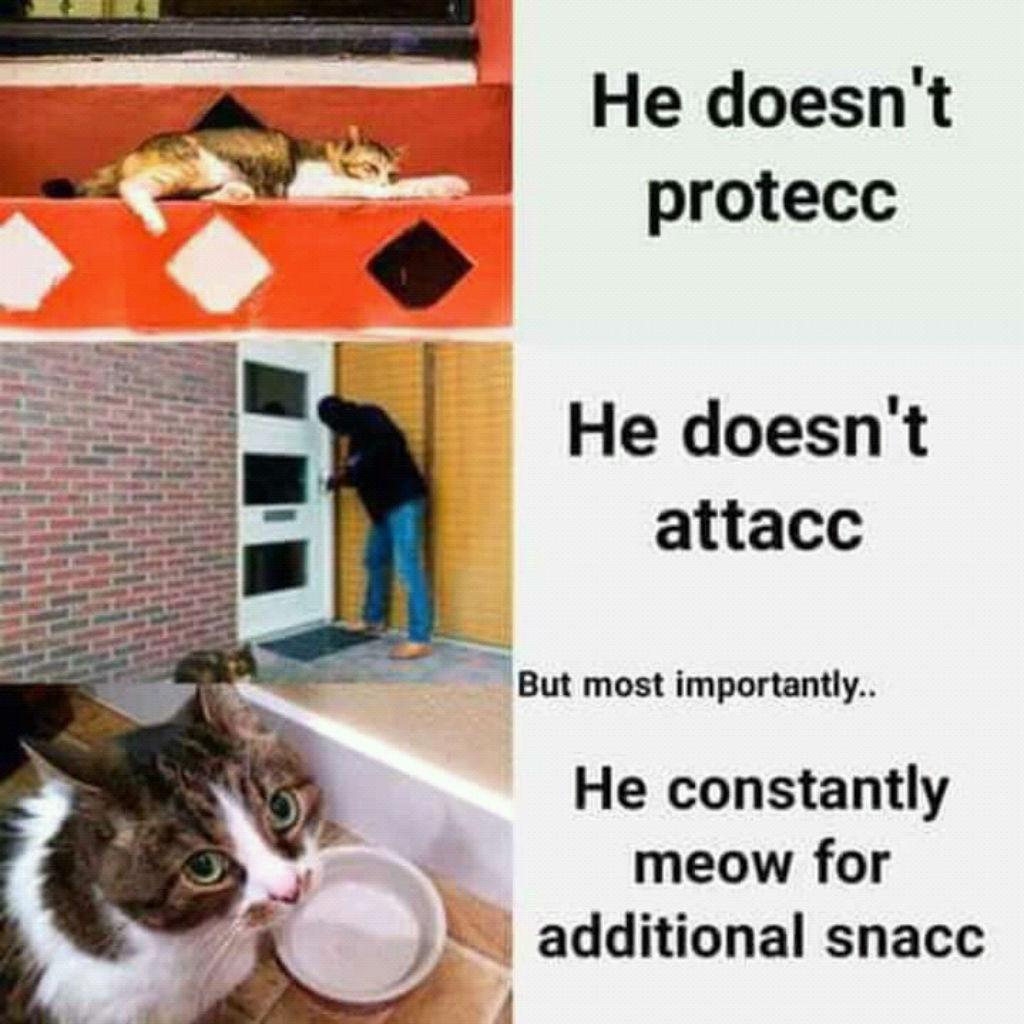 Snacc cat memes