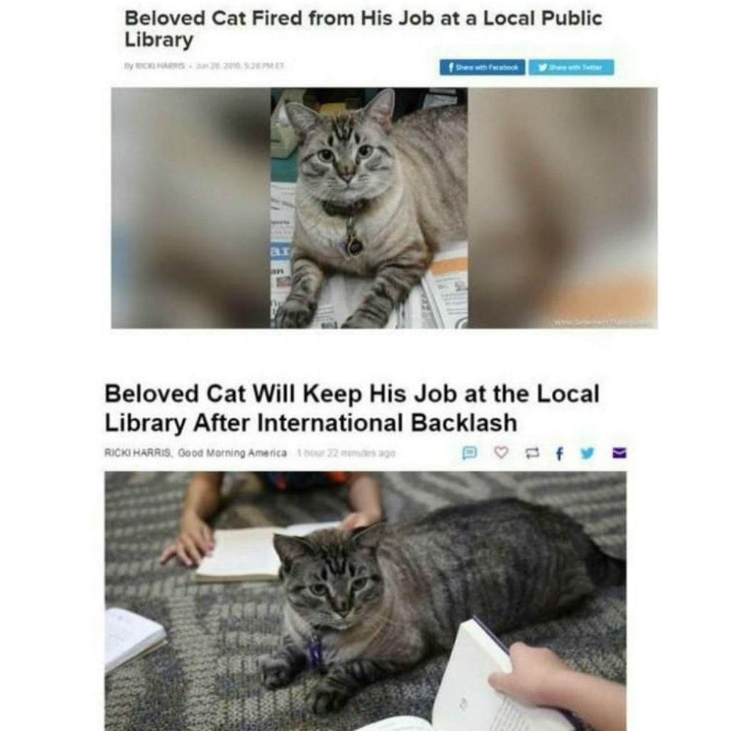 Beloved cat memes