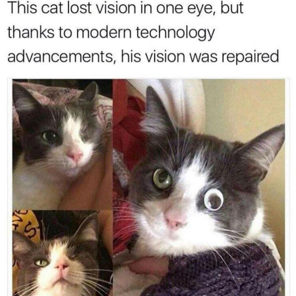 One-eyed cat memes