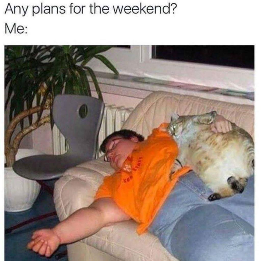Napping cat memes