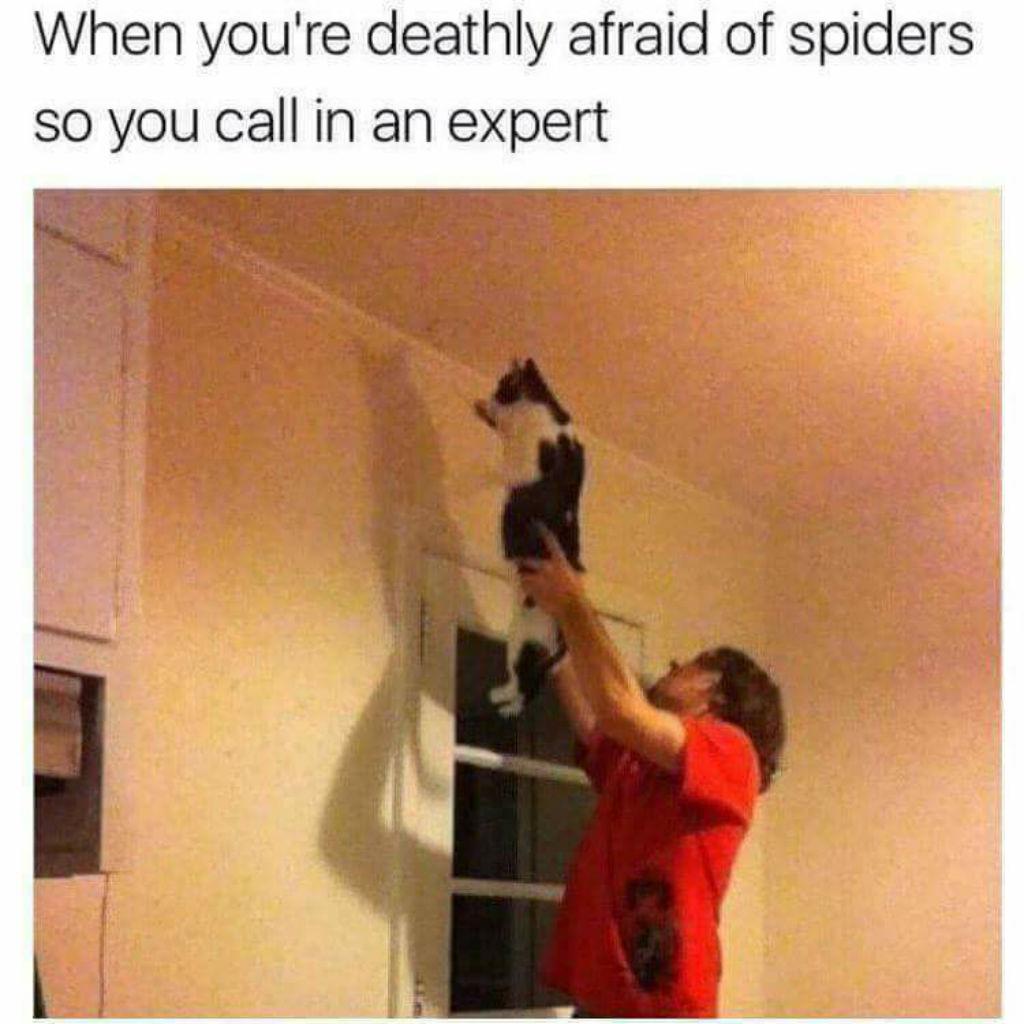 Spiders cat memes