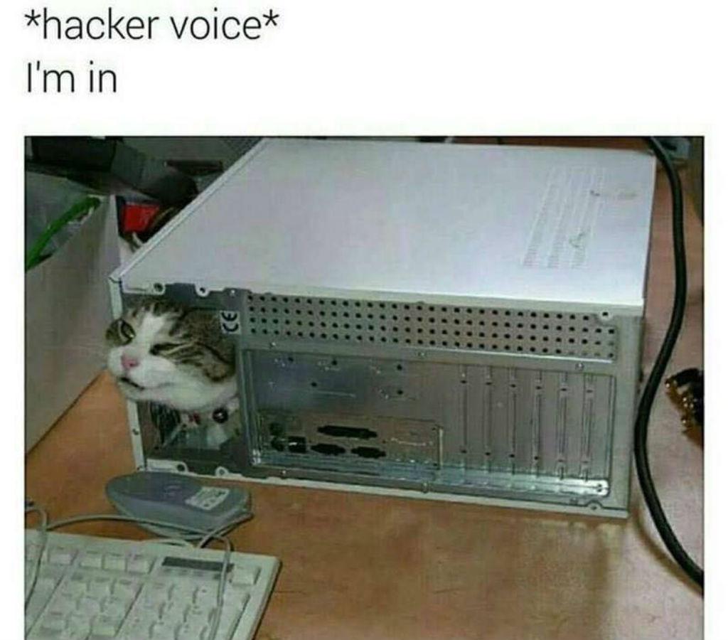 Hacker cat memes