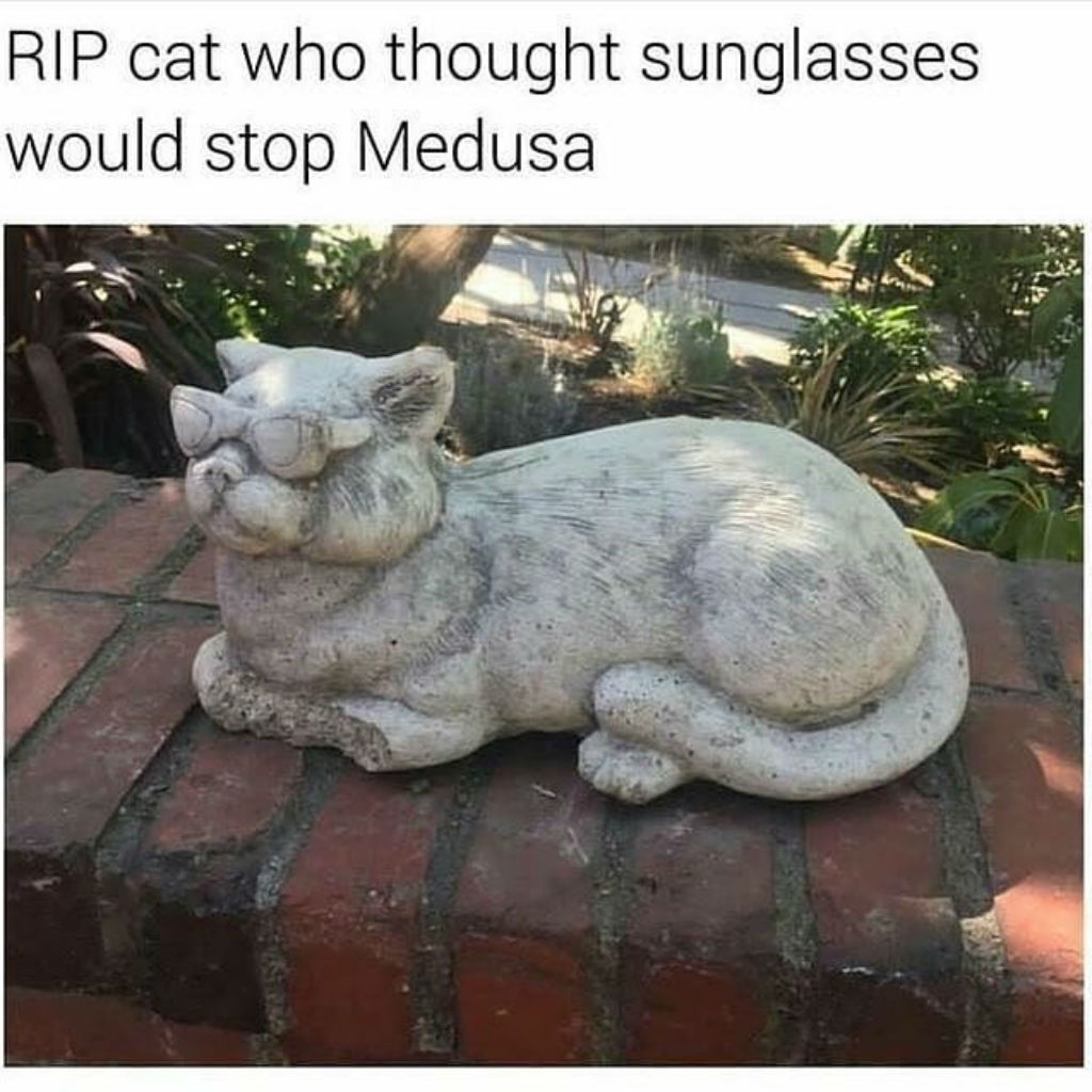 Medusa cat memes
