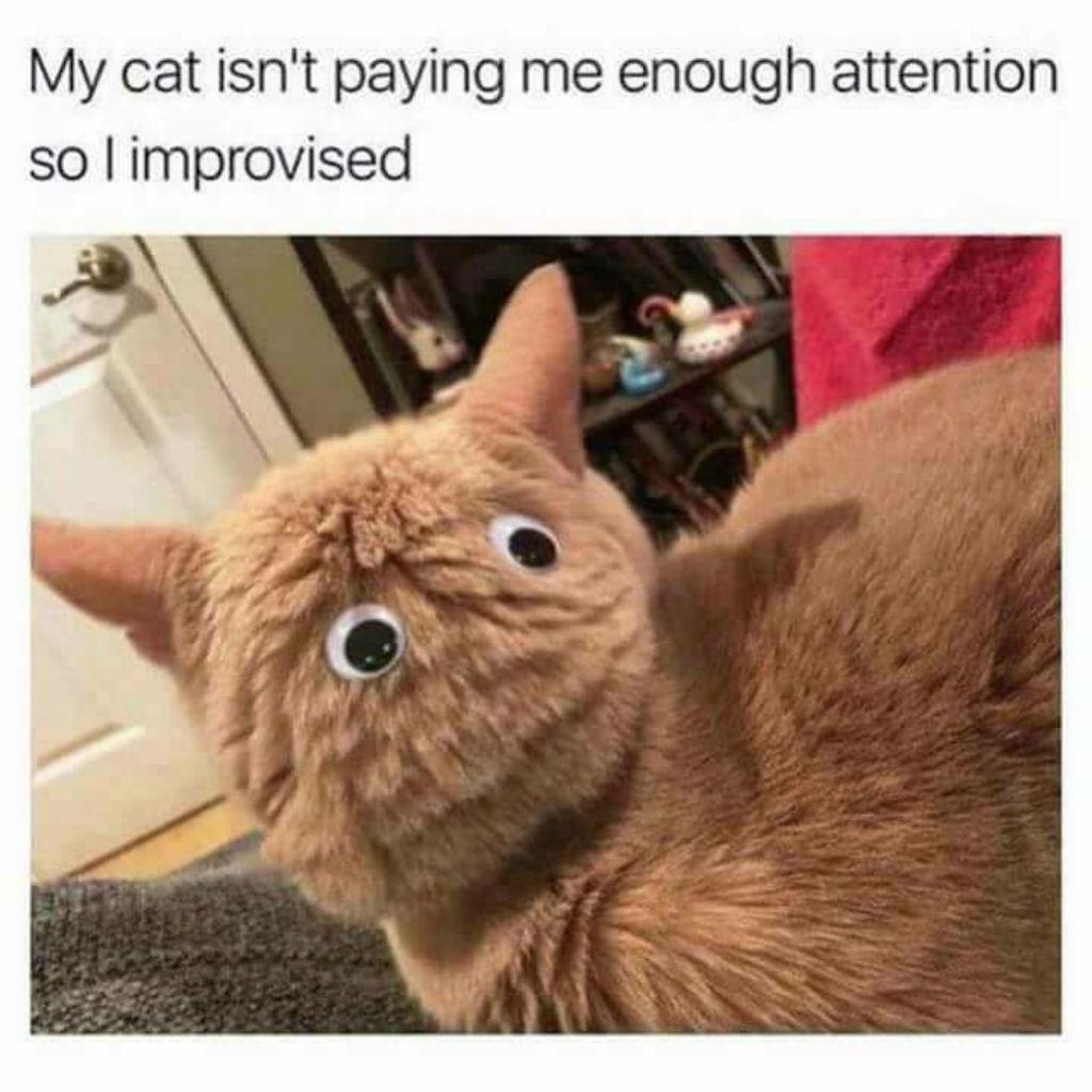 Googly eyed cat meme