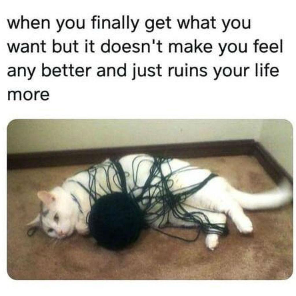 Yarn cat memes