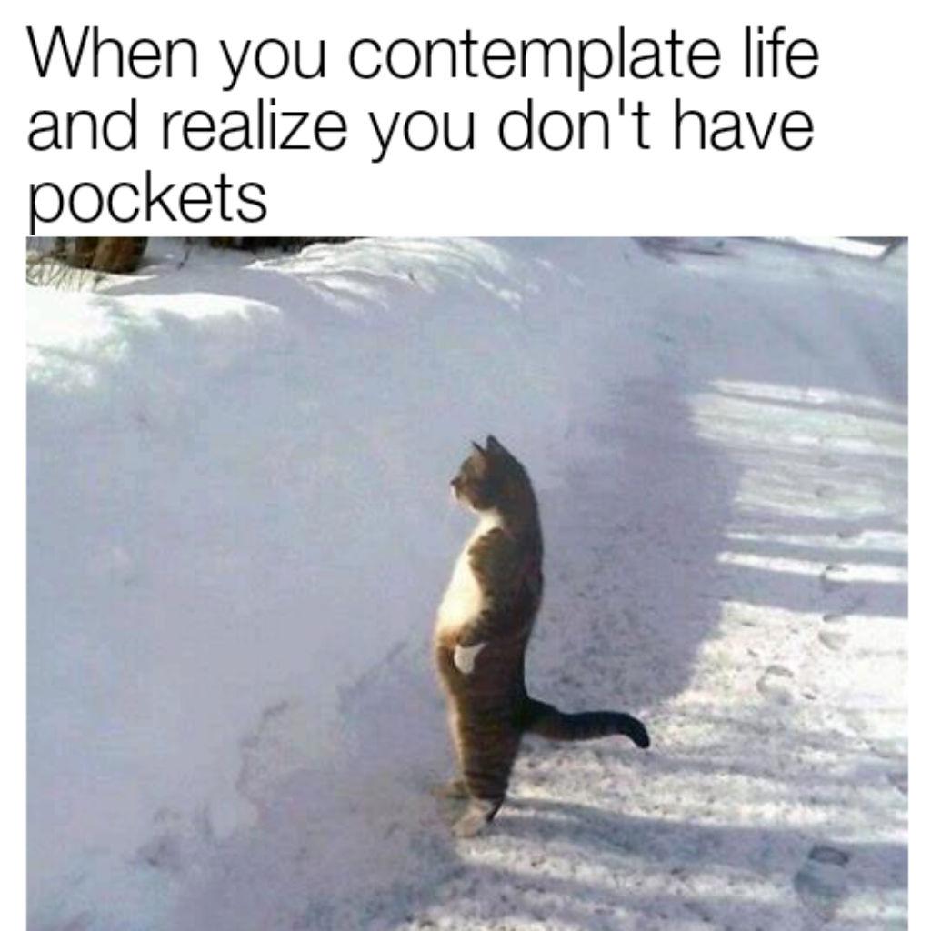 Pocketless cat meme