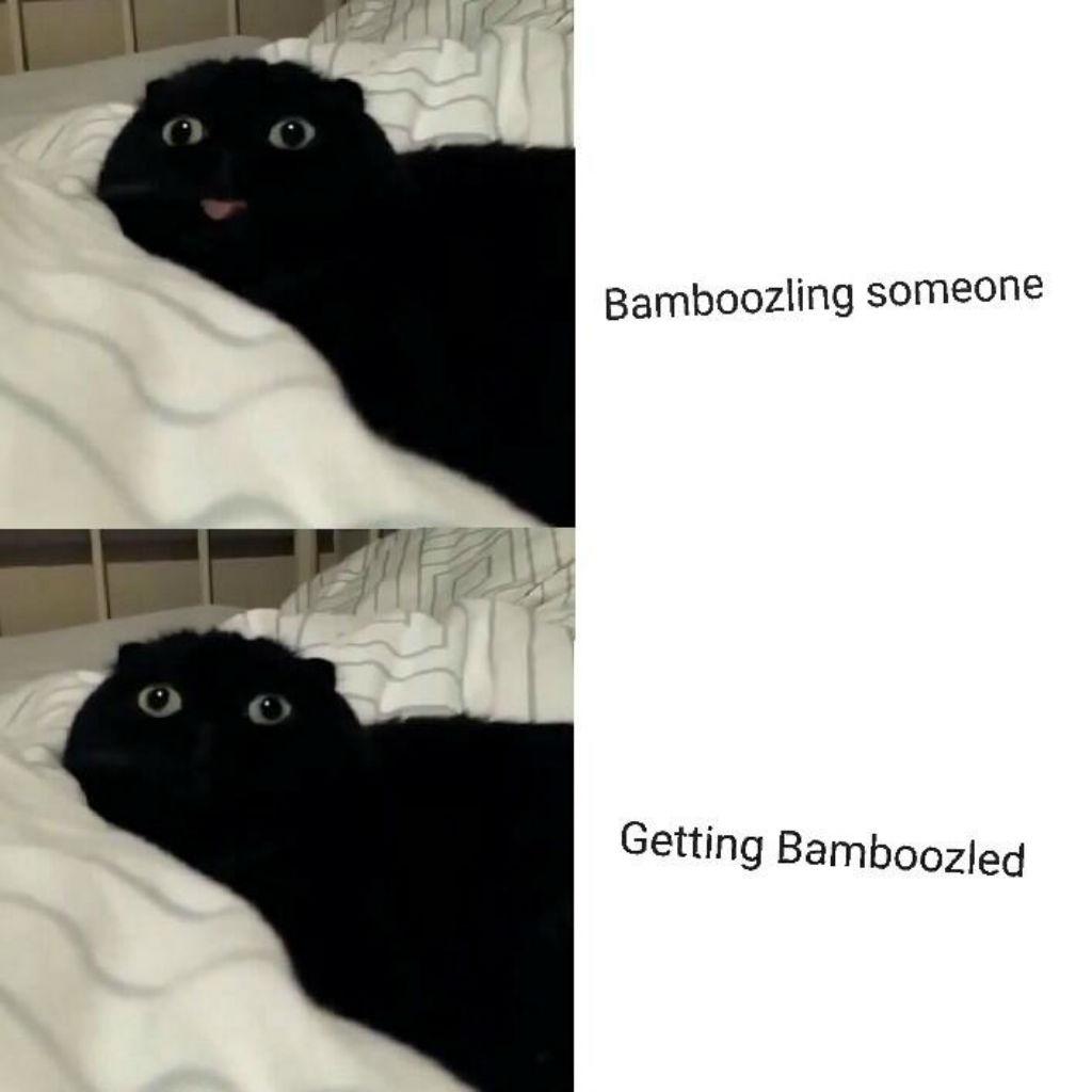 Bamboozled cat memes