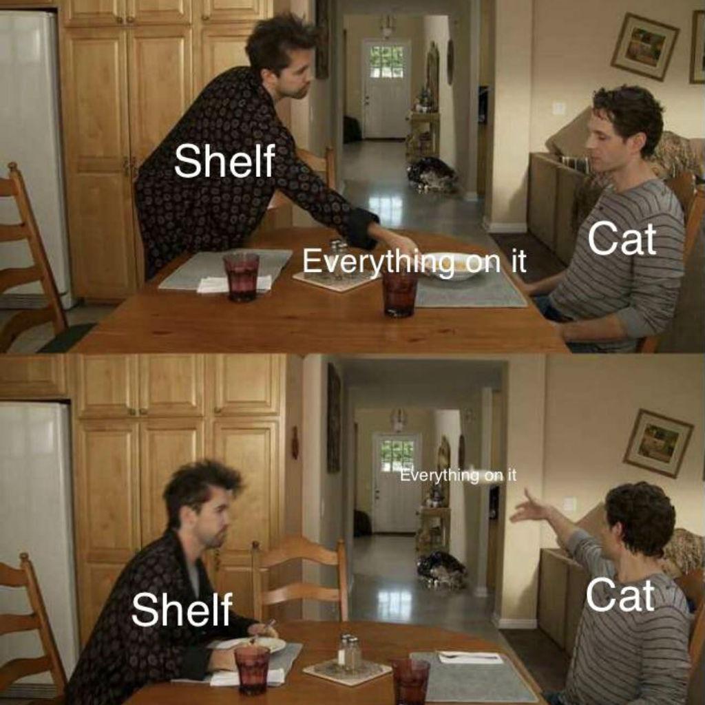Shelves cat memes