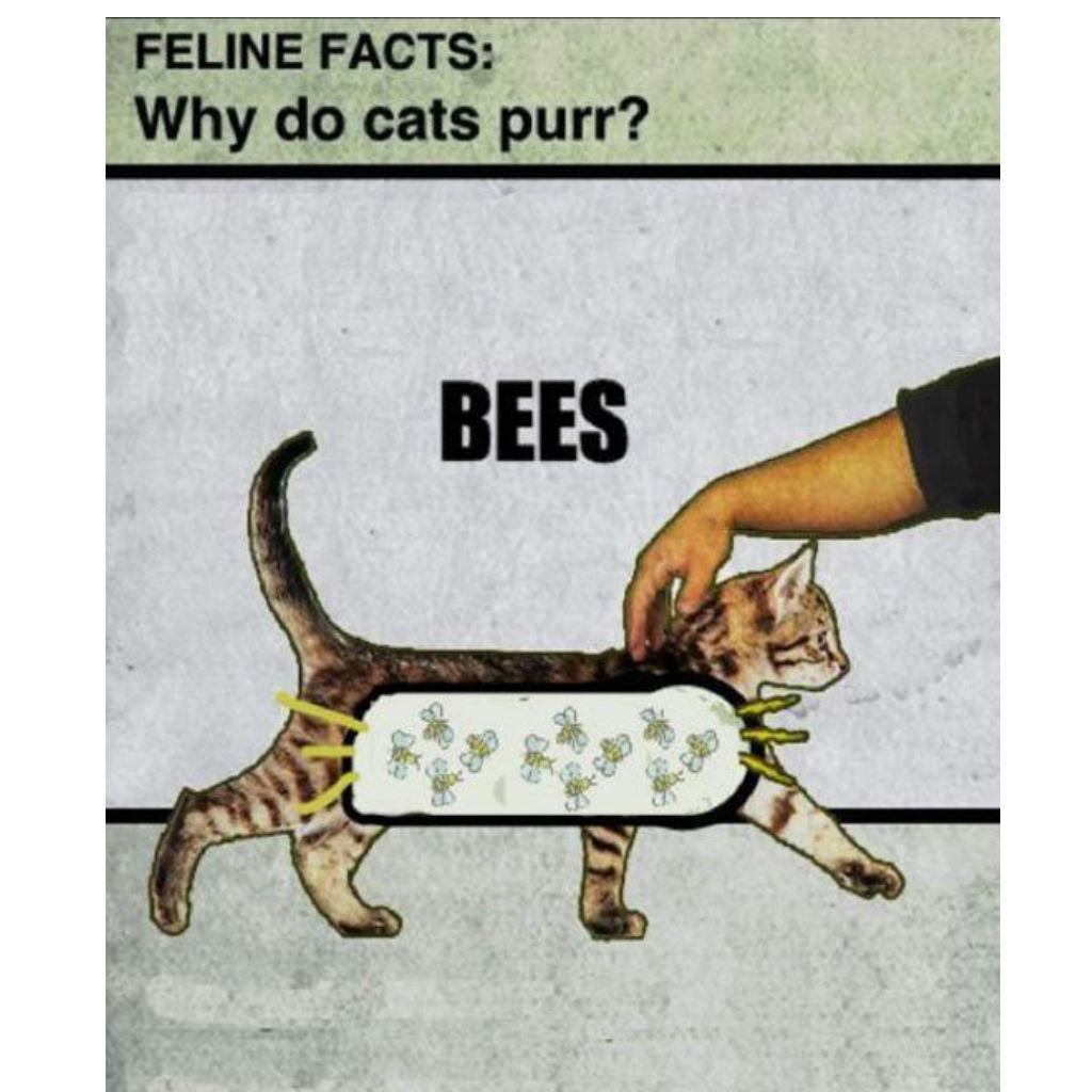 Bees cat memes