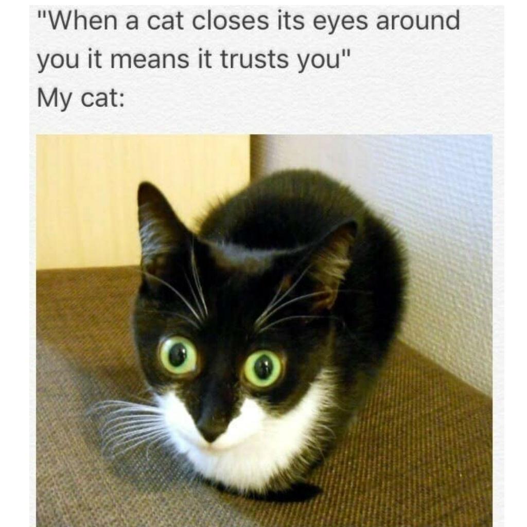 Trusting cat memes