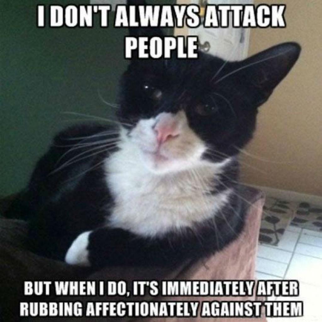 Most interesting cat memes