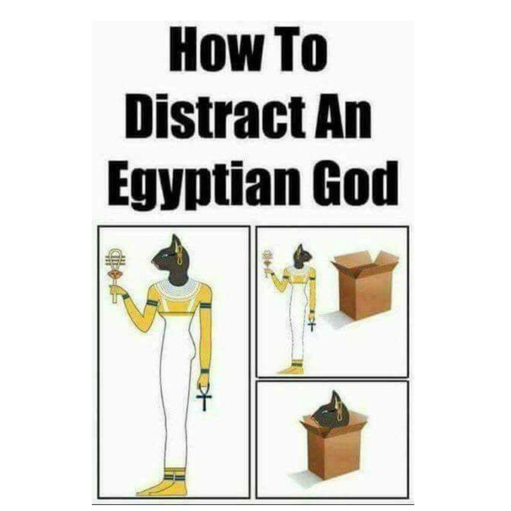 Egyptian cat memes
