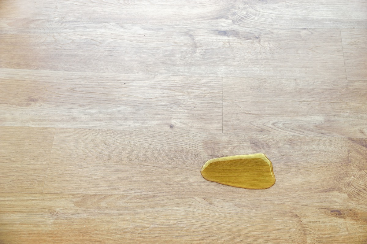 urine of a cat or a dog on the floor of a house
