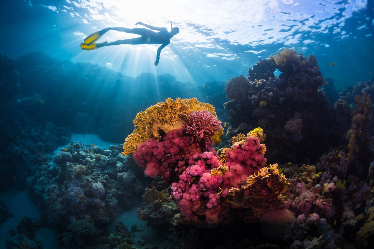 diver swimming over coral reef