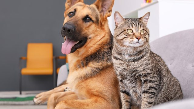 dog and cat sitting on couch together