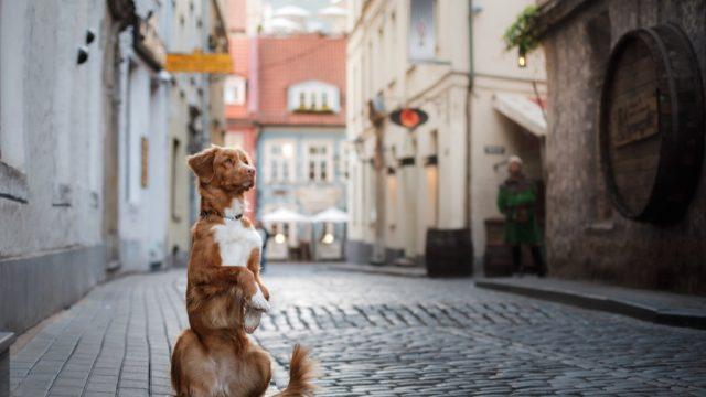 Dog, travel