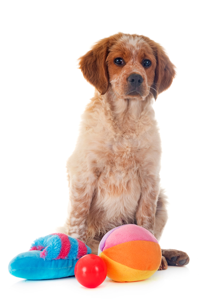 Dog with Pet Toys things you never knew dogs could do