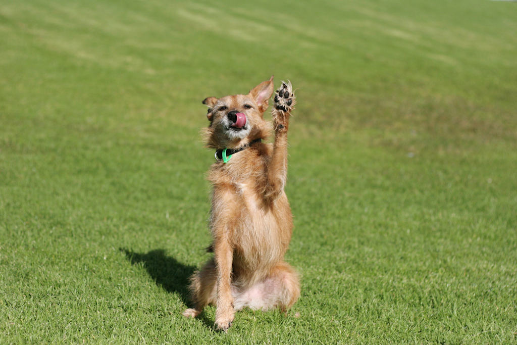 dog raises paw in air things you never knew dogs could do