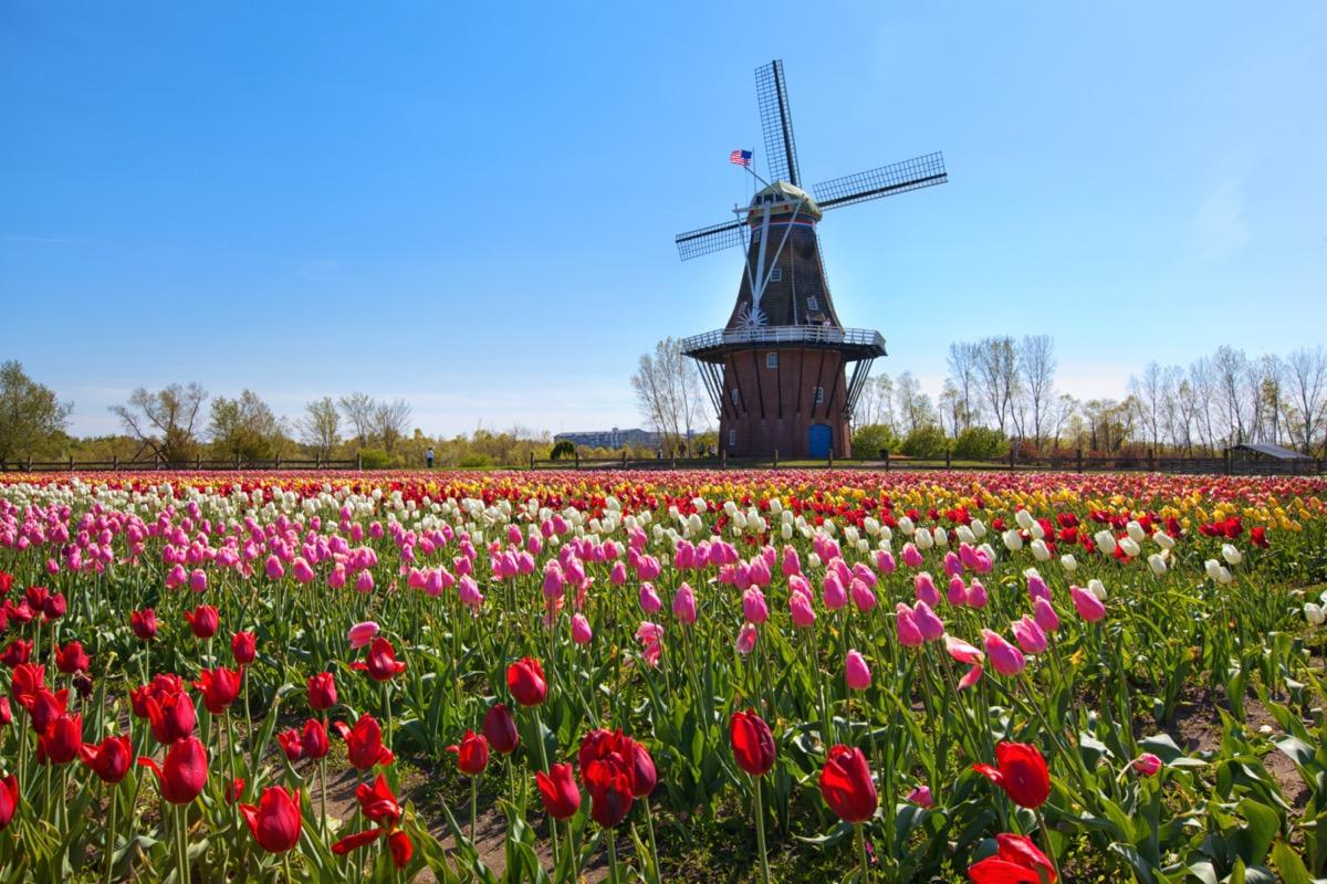 windmill in holland michigan