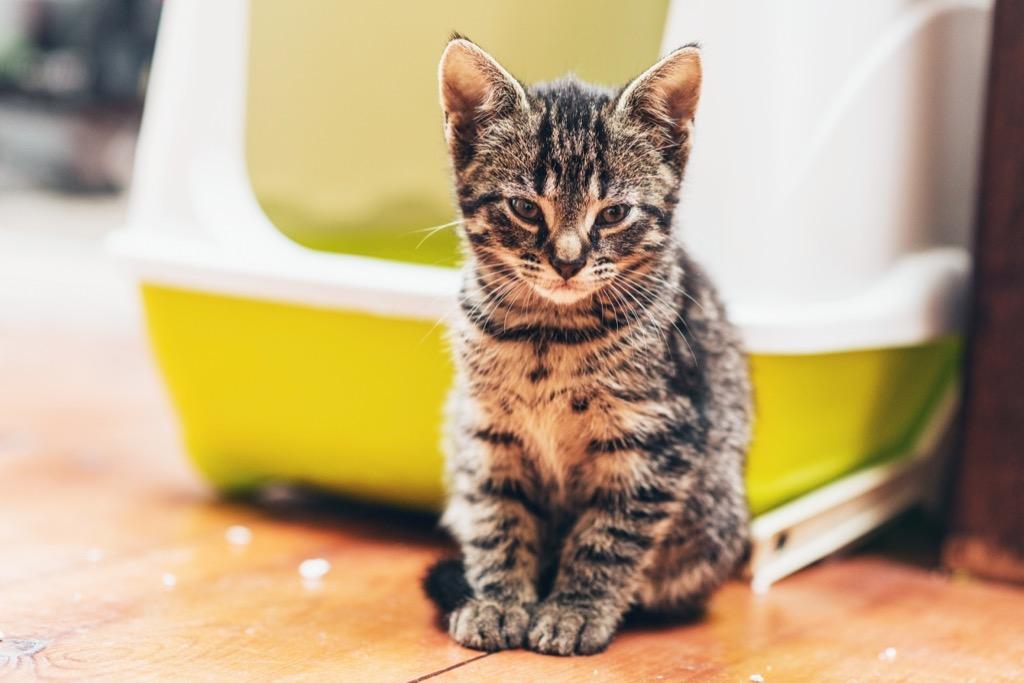 kitten in litter box, things you should never store in basement