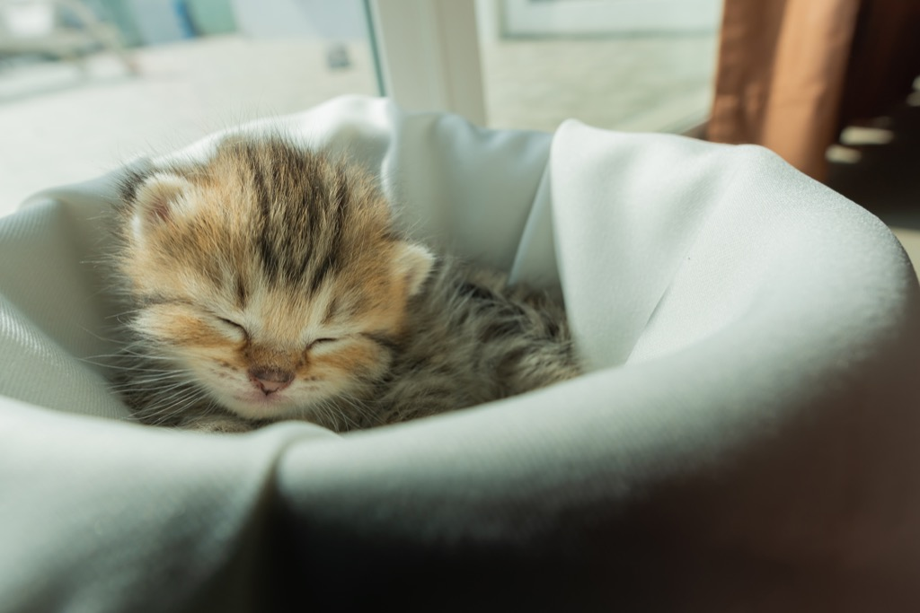 sleeping kitten why cats are better than dogs