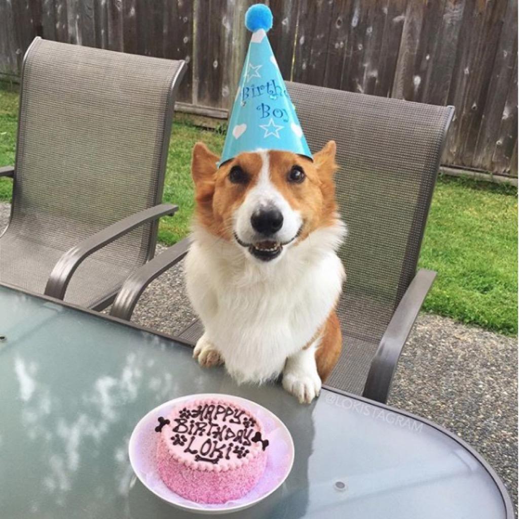 Loki celebrates his birthday.