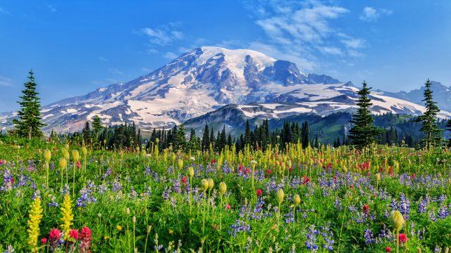 Mount Rainier National Park Magical Destinations