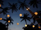 palm tree party lights christmas lights outdoors