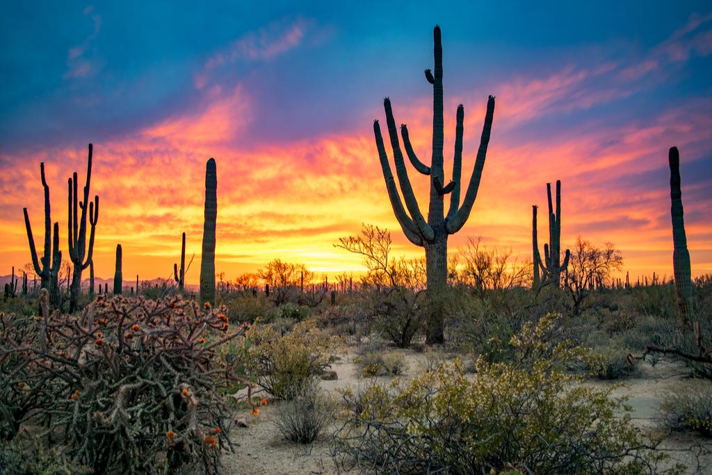 Saguaro National Park Arizona natural wonders in america