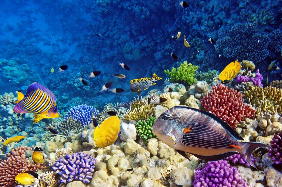 School of fish in ocean
