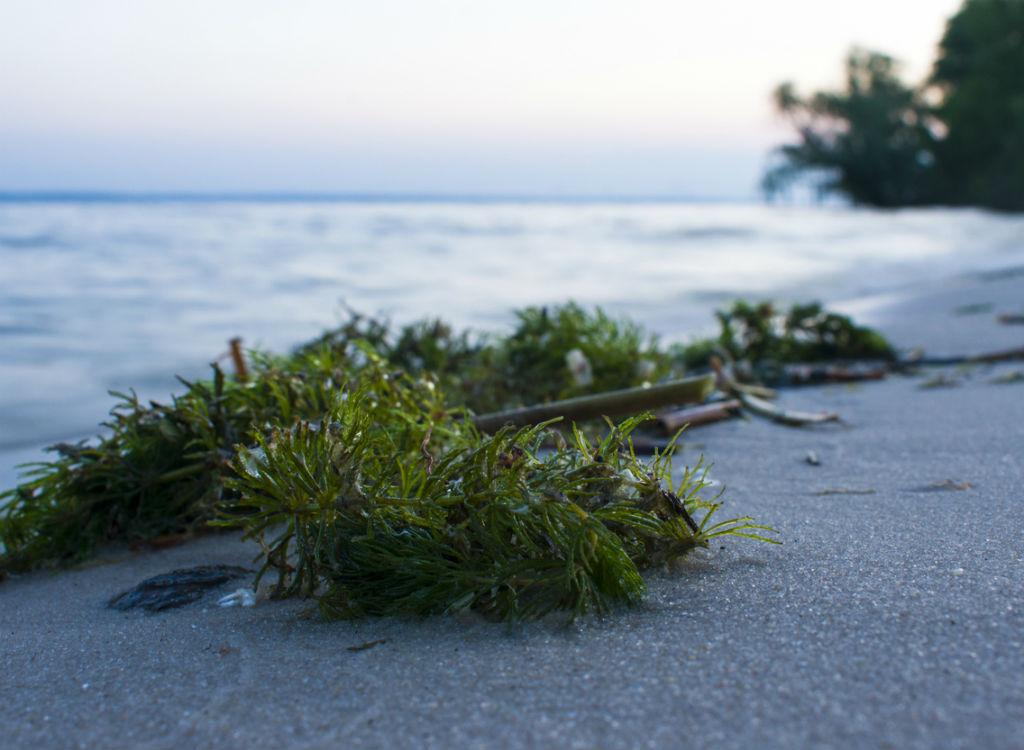 Closeup of the beach at dusk