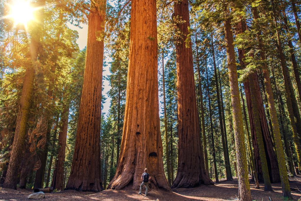Sequoia National Park California Magical Destinations