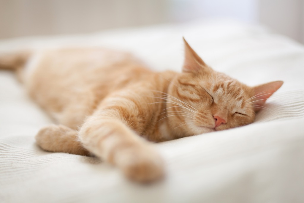 sleeping cat signs of affection