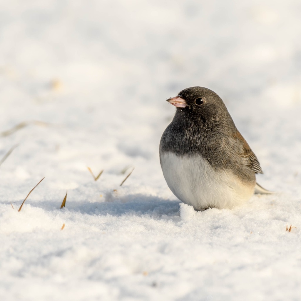 snowbird, top slang words in every state