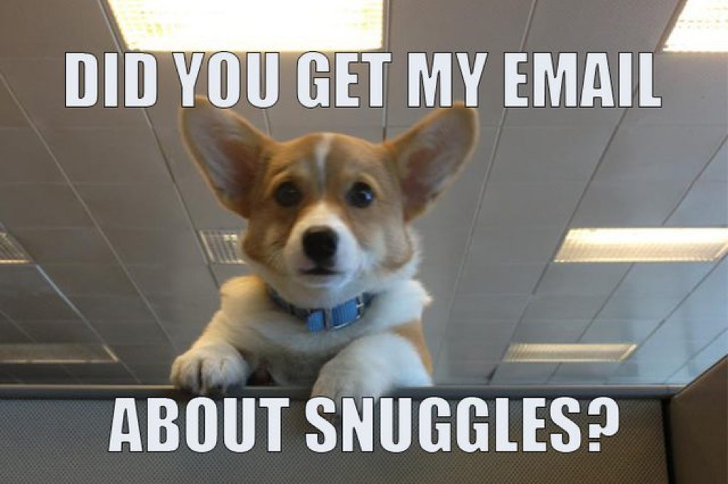 did you get my email about snuggles meme